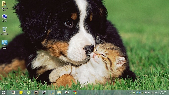 Animal-Affection-Theme-for-Windows-8.1