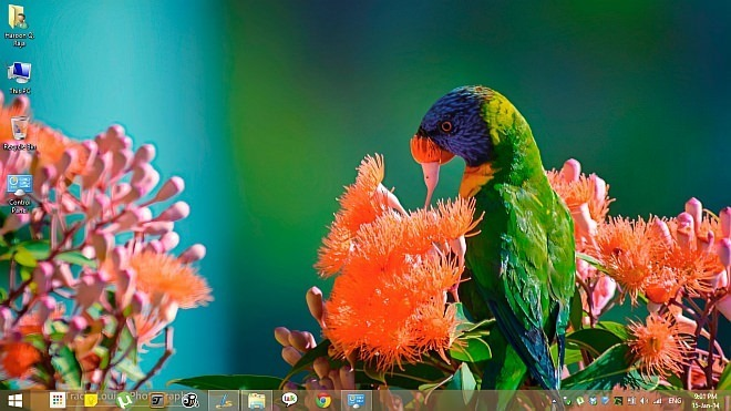 Rainbow-of-Birds-Theme-for-Windows-8.1