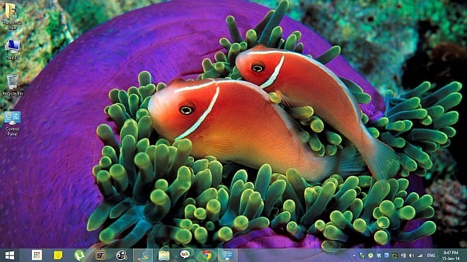 Tropical-Fish-Theme-for-Windows-8.1